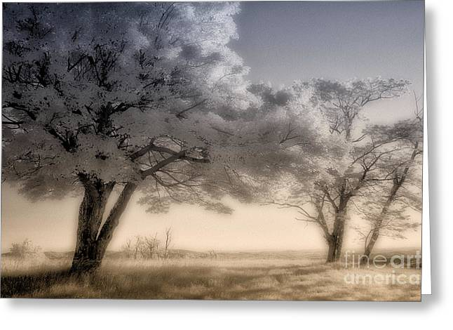 Morning Softness II - Blue Ridge Parkway Greeting Card by Dan Carmichael