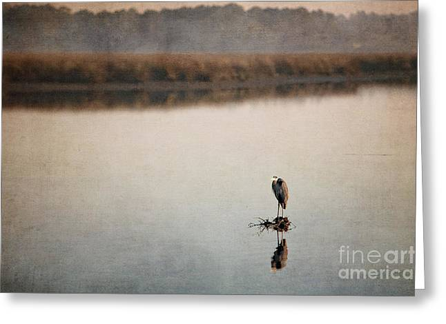 Morning Solitude Greeting Card by Joan McCool