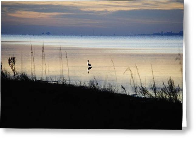 Morning Solitude Greeting Card by Michele Kaiser