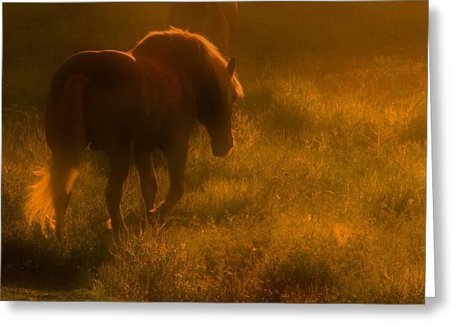 Morning Stroll Greeting Card by Jim Vance