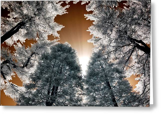 Morning Sun And Pines Greeting Card