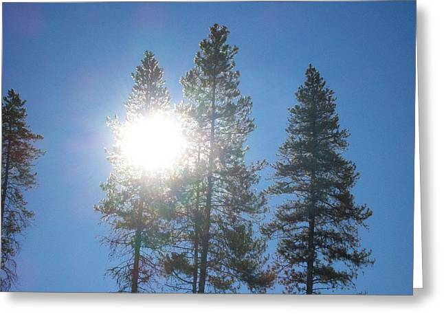 Greeting Card featuring the photograph Morning Sun by Jewel Hengen
