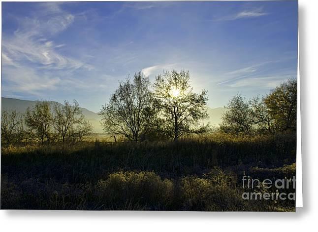 Morning Sun  Greeting Card by Nicole Markmann Nelson