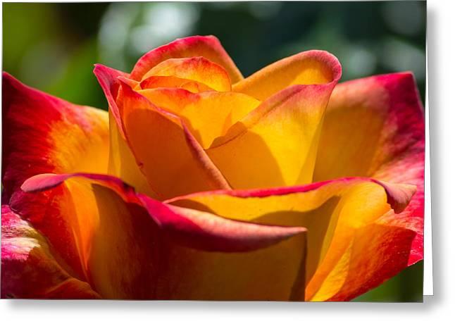 Morning Sun Rose Greeting Card by Tikvah's Hope