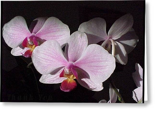 Morning Sunlight Orchids And A Reminder To Utter The Words Thank You. Greeting Card