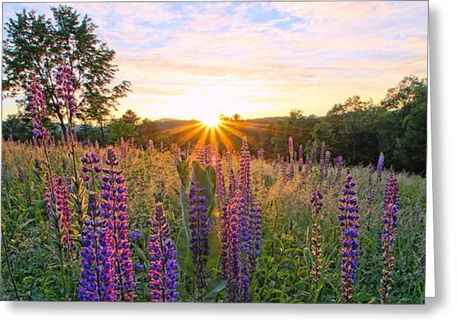 Morning Sunrise In Sugar Hill Greeting Card by Andrea Galiffi