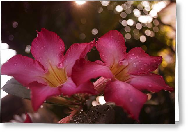 Morning Sunshine And Rain Greeting Card by Miguel Winterpacht