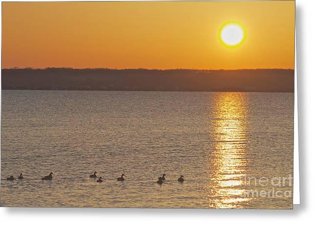 Morning Swim Greeting Card by William Norton