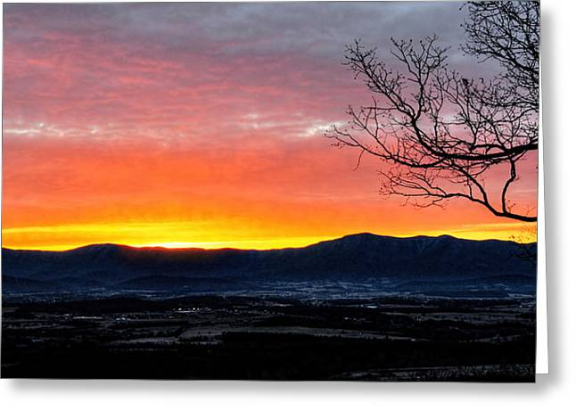 Greeting Card featuring the photograph Morning Tangerine Glow by Lara Ellis