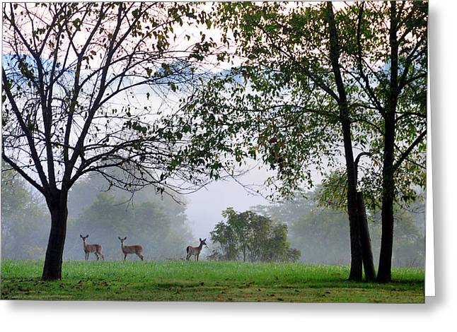 Morning Trio Greeting Card by Gail Butler