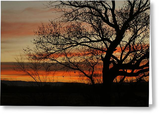 Morning View In Bosque Greeting Card by James Gay