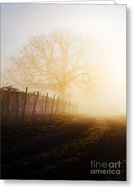 Morning Vineyard Greeting Card by Shannon Beck-Coatney