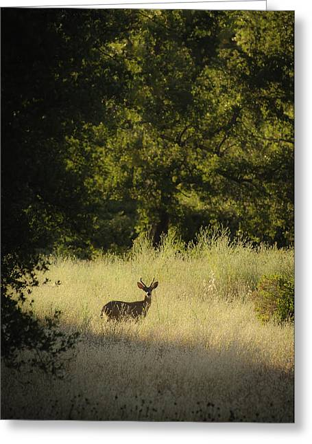 Greeting Card featuring the photograph Morning Visitor 2 by Sherri Meyer