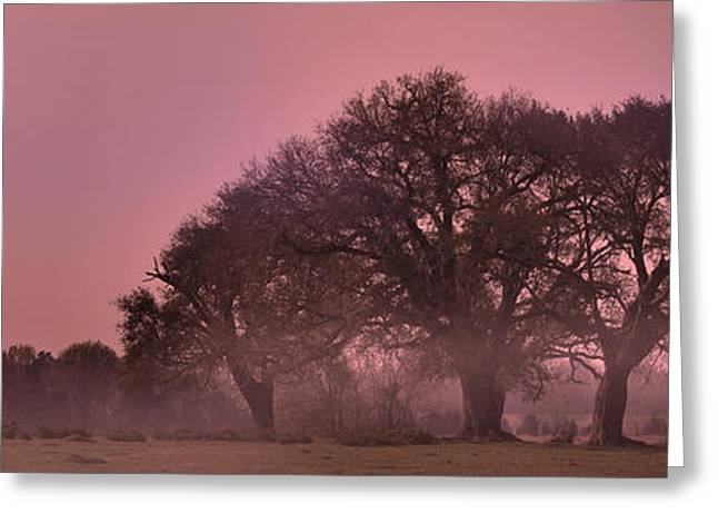 Morning Whispers In Mississippi Greeting Card