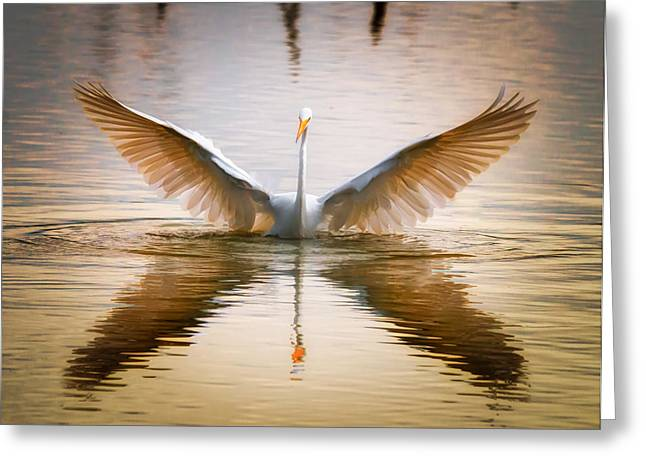 Morning Wings An Egret Awakes Greeting Card