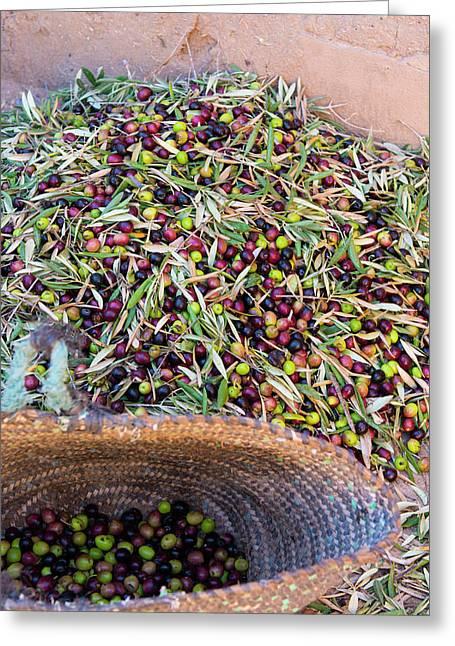 Morocco Skoura Small Village Berber Greeting Card by Bill Bachmann