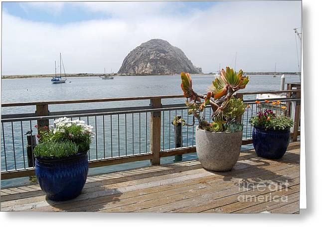 Morro Bay And Plants Greeting Card