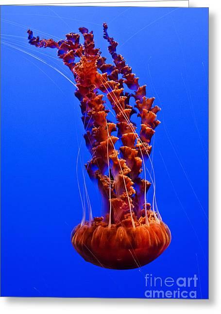 Monterey Bay Aquarium 1 Greeting Card