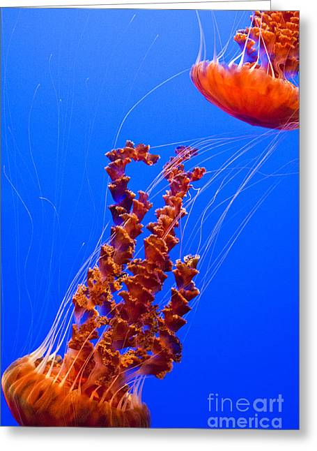 Monterey Bay Aquarium 3 Greeting Card by Micah May