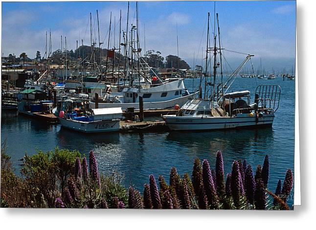 Morro Bay Harbor Greeting Card by Kathy Yates