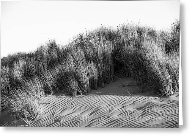 Greeting Card featuring the photograph Morro Beach Shrubbery by Terry Garvin