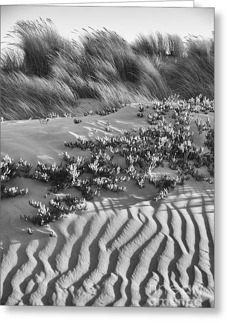 Morro Beach Textures Bw Greeting Card