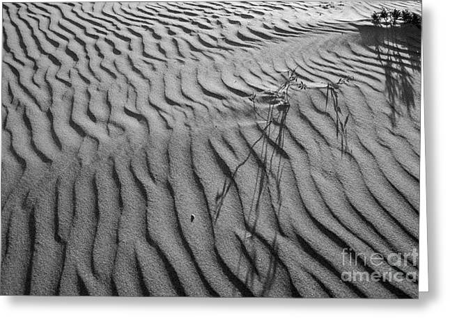 Greeting Card featuring the photograph Morro Strand Beach Ripples by Terry Garvin