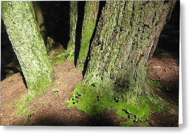 Moss Against The Shadows Greeting Card