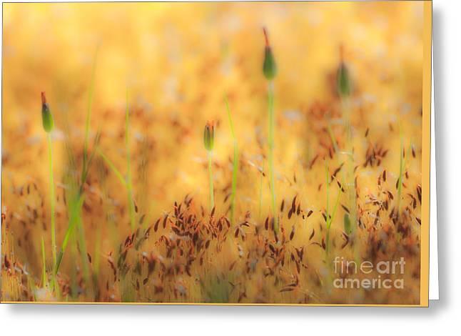 Moss And Flowers - Greensboro North Carolina Greeting Card by Dan Carmichael