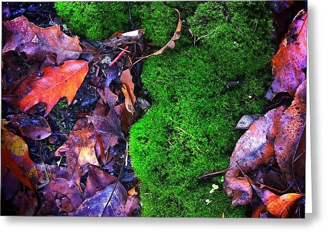 Moss And Leaves Greeting Card by Amy Cicconi