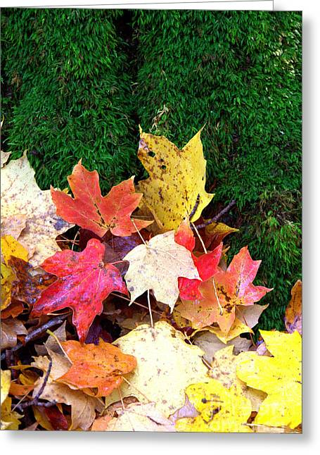 Greeting Card featuring the photograph Moss And Leaves by Jim McCain
