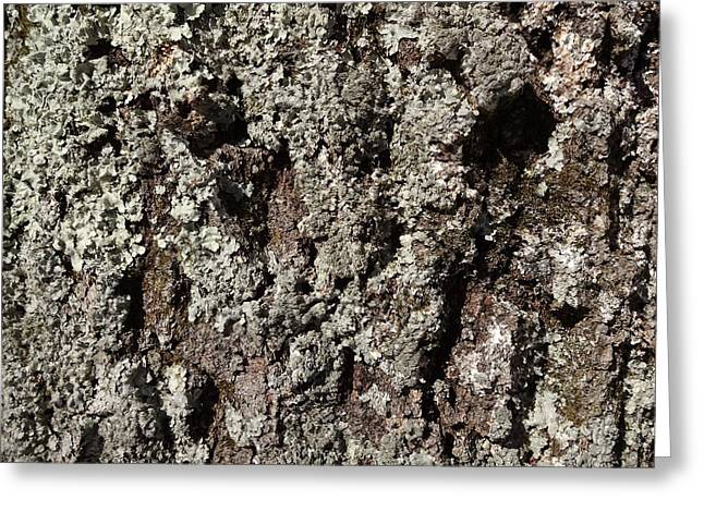Greeting Card featuring the photograph Moss And Lichens by Jason Williamson