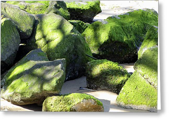 Moss On The Rocks Greeting Card