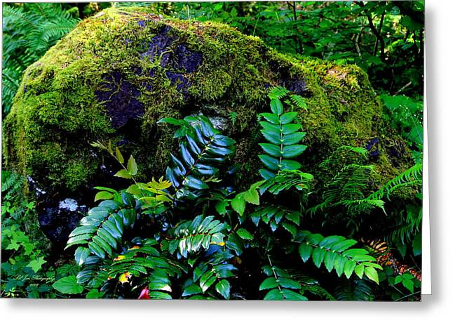 Moss Covered Boulder Greeting Card