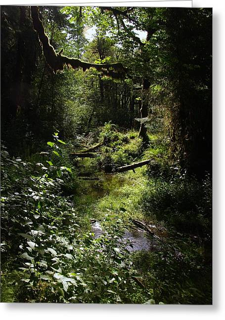 Moss Covered Branches Greeting Card by Jeff Swan