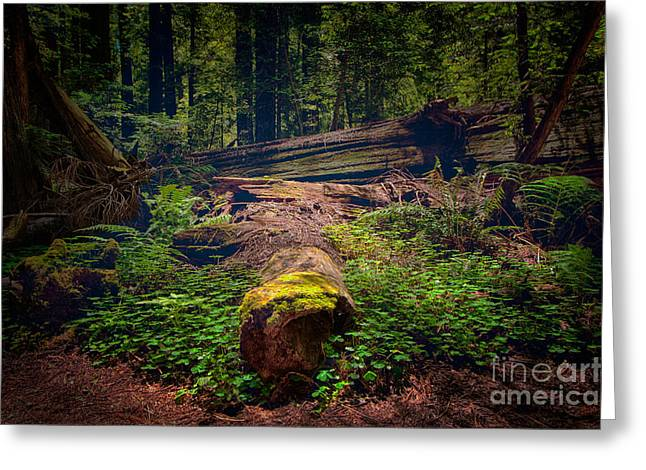 Moss Covered Tree - California Redwoods Greeting Card