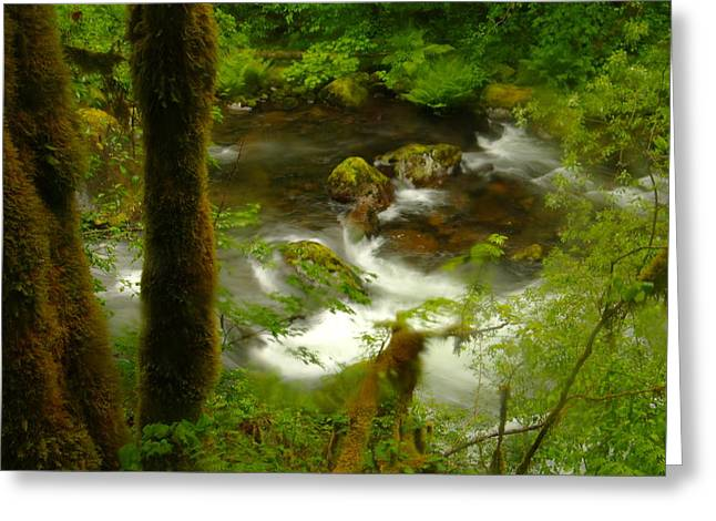 Moss Covered Trees Foregound Eagle Creek Greeting Card by Jeff Swan