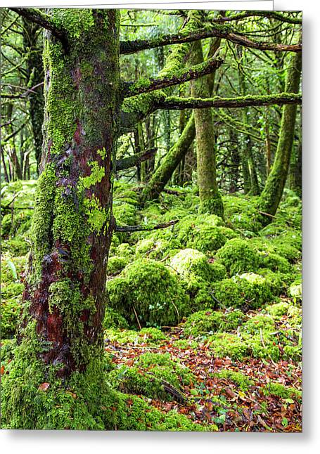 Moss Covered Trees In Killarney Greeting Card