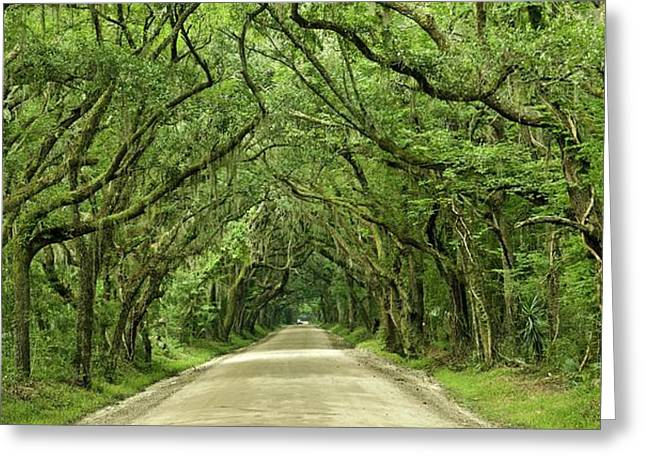Moss Covered Trees On Botany Bay Road  Edisto Island Sc Greeting Card