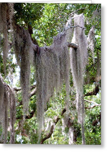 Moss Draped Tree Branch Greeting Card by Victoria Leyva