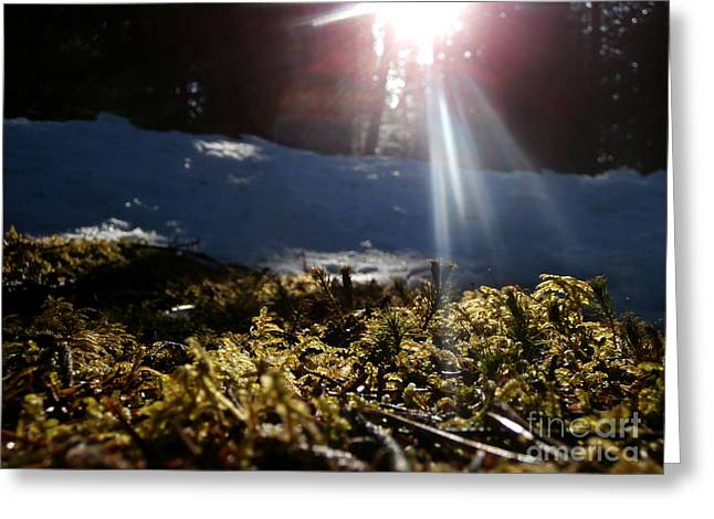 Moss In The Sunlight Greeting Card by Steven Valkenberg