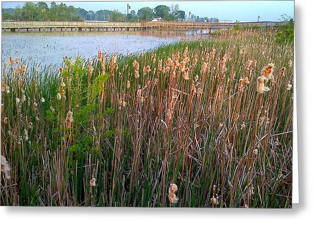 Moss Landing Washington North Carolina Greeting Card