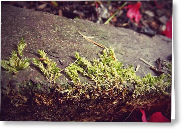 Moss Greeting Card by Laura Mazzuca