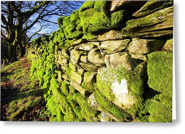 Moss On A Drystone Wall Greeting Card by Ashley Cooper