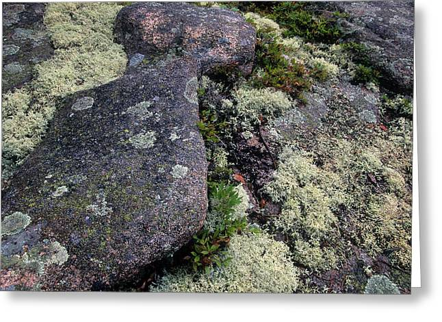 Moss On Rock-lubec-maine Greeting Card by Harold E McCray