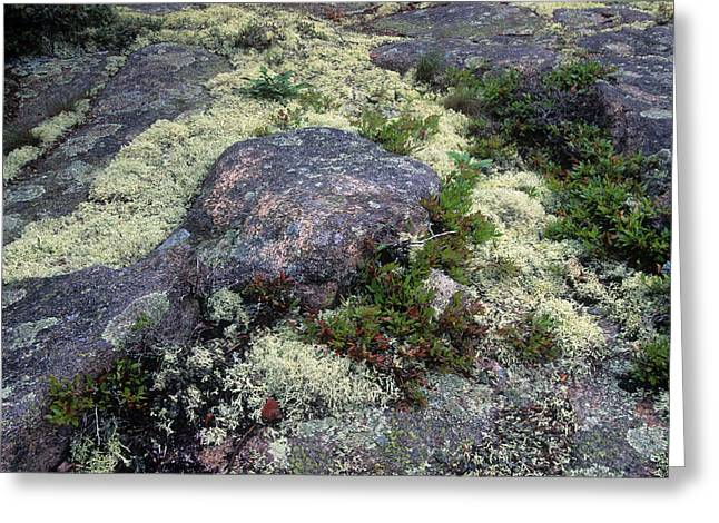 Moss On Rock-lubec-maine II Greeting Card by Harold E McCray