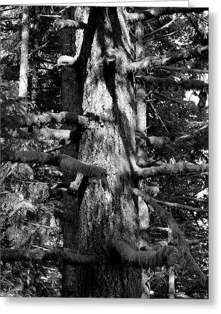 Moss On The Evergreens II In Black And White Greeting Card