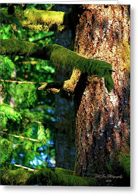 Moss On The Evergreens Greeting Card