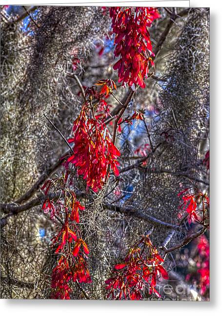 Moss On The Red Tree Greeting Card by Marvin Spates