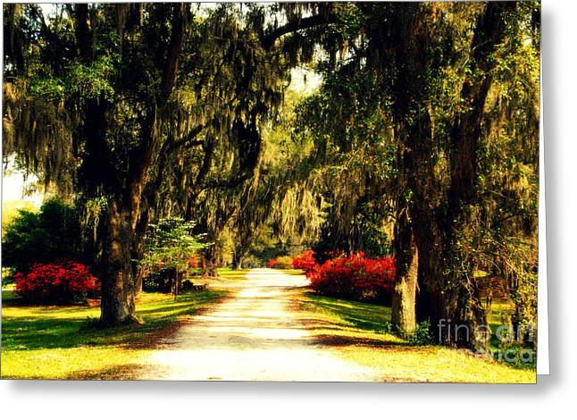 Moss On The Trees At Monks Corner In Charleston Greeting Card by Susanne Van Hulst